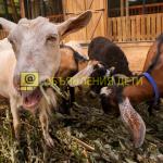 День открытых дверей на «Городской ферме» на ВДНХ (6+)