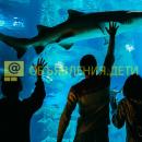 видеоэкскурсия «акулы и обитатели главного морского аквариума»