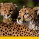 Музеи и зоопарки онлайн (для всей семьи)